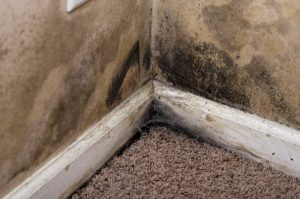 mold removal logan, professional mold removal logan