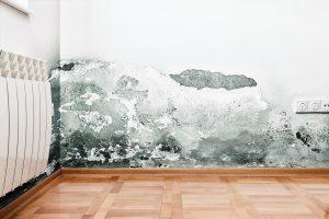 mold removal logan, professional mold removal logan