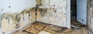 mold removal logan, mold cleanup logan