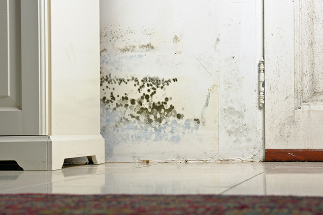 bear lake county water damage